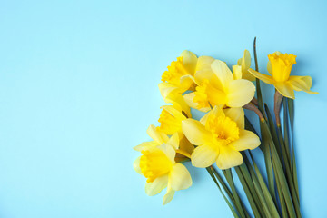 Obraz Bouquet of daffodils on color background, top view with space for text. Fresh spring flowers - fototapety do salonu