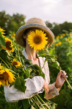 Girl collects sunflowers in a field