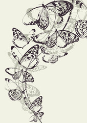 Canvas Prints Butterflies in Grunge Beautiful butterfly vector background