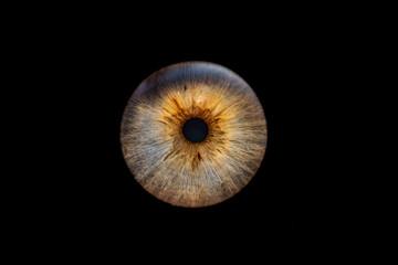 Deurstickers Iris Iris 4
