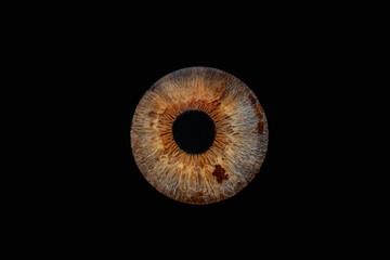 Fond de hotte en verre imprimé Iris Iris 1