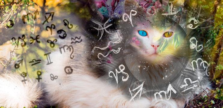 Magic cat and zodiac signs