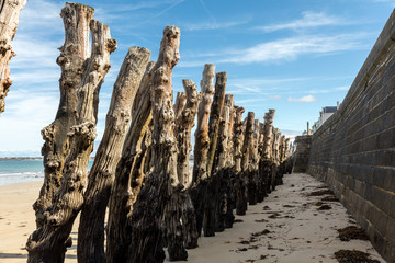 Big breakwater, 3000 trunks to defend the city from the tides, Plage de l'Éventail beach in Saint-Malo, Ille-et-Vilaine, Brittany,