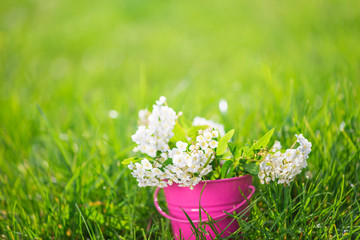 a bouquet of white spring flowers in bucket, beautiful spring background