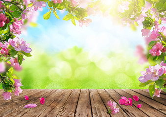 a spring flowers background, pink blossoms on wooden table
