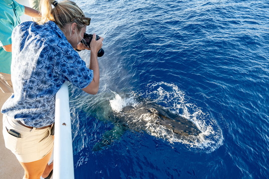Female Photographer taking picture of humpback whale in Hawaii