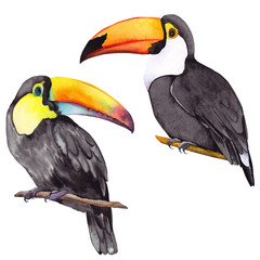 Deurstickers Toekan Set of toucan birds. Watercolor illustration on white background. Isolated elements for design.
