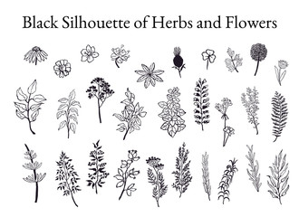 Illustration set of herbs, plants and flowers sketches