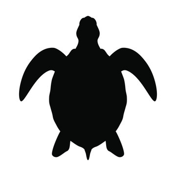 Sea turtle graphic icon. Sea turtle black silhouette isolated on white background. Vector illustration