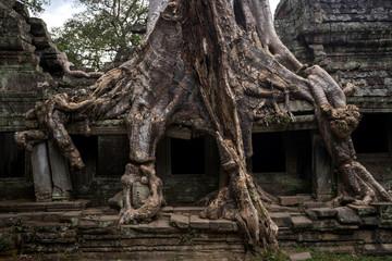 Prasat Preah Khan temple, in Siem reap, Cambodia Fototapete