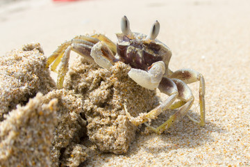 Sand crab on a pile of sand on a beach, Vietnam