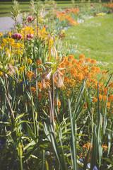 Blumenbeet - Gartengestaltung