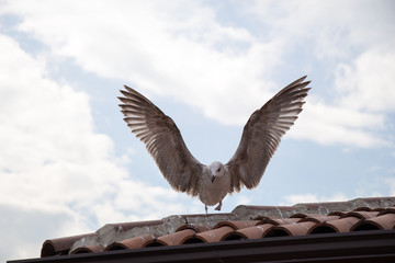 Single seagull sitting on the roof