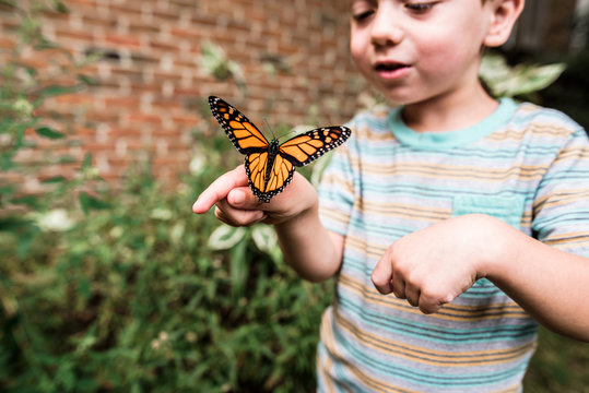 Boy holding Monarch butterfly on his hand and smiling