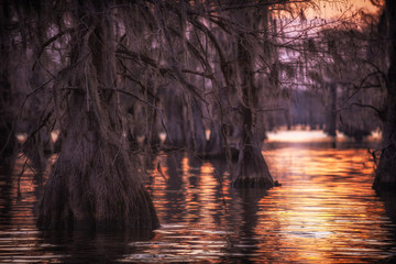 Bald cypress trunks with sunset reflection at Caddo Lake