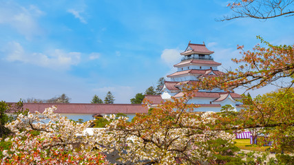 Aizu-Wakamatsu Castle with cherry blossom  in Japan