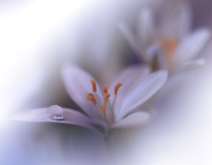 Beautiful Nature Background.Colorful Artistic Wallpaper.Natural Macro Photography.Beauty in Nature.Creative Floral Art.Tranquil nature closeup view.Blurred space for your text.Wedding Invitation.