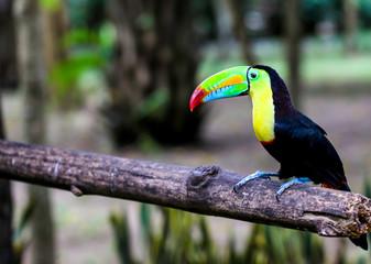 In de dag Toekan Parrot and other exotic birds