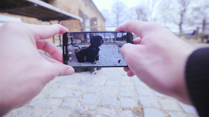 Take a picture of dog with smartphone
