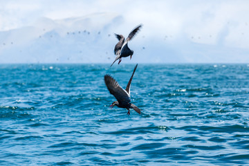 birds to hunt for fish