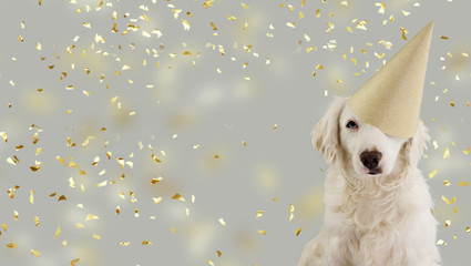 CUTE DOG WITH BLUE EYES CELEBRATING A BIRTHDAY, CARNIVAL, MARDI GRAS OR NEW YEAR PARTY WITH A GOLDEN GLITTER HAT. ISOLATED AGAINST GRAY BACKGROUND WITH CONFETTI FALLING.