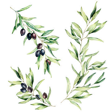 Watercolor olive tree branch set with leaves and black olives. Hand painted floral illustration isolated on white background for design, print, fabric or background.