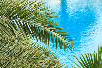 The fresh palm leaves on the beautiful clean water background . Tropical plants at the beach resort. Wall mural