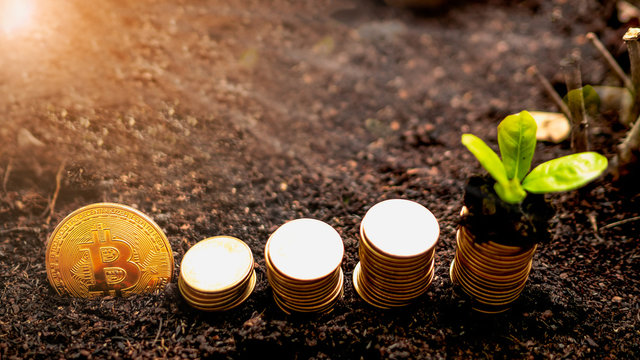 Bitcoin coin with  a pile of money on the ground arranged in a pile of steps, The last coin group has a growing seedling on top. Concept The growth of digital money.