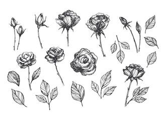 Hand drawn vector roses set. Hand sketched floral illustration