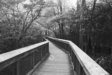 Boardwalk at  Ichetucknee Springs State Park in Black and White