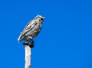 Owl perched on a pole at Hawk Mountain in PA