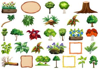 Set of ornamental plants