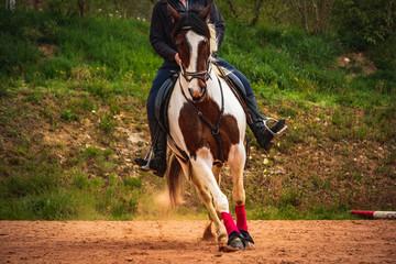Equitation western
