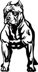 Pitbull vector illustration