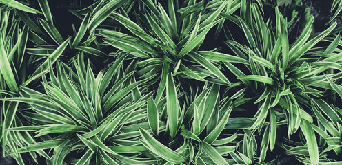 Green leaves plant pattern for background, fresh spring beautiful nature as vivid color  leaf  and...