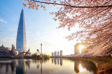 Morning sunrise in cherry blossom park