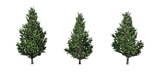 Set of Christmas Scotch Pine trees - isolated on a white background Wall mural