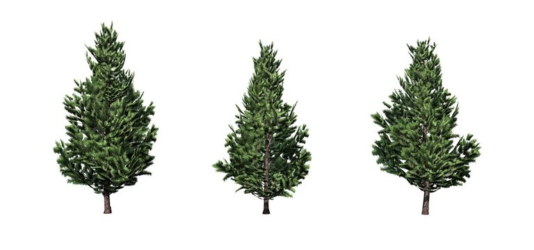 Set of Christmas Scotch Pine trees - isolated on a white background