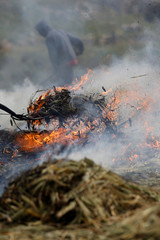 Palestinian workers burn wheat spikes in the process of making freekeh, a Middle Eastern cereal dish, in Jenin in the Israeli-occupied West Bank