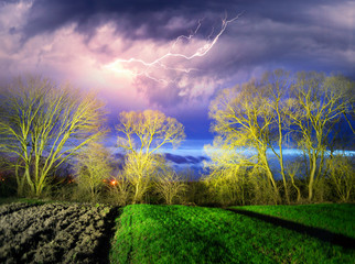 Wall Mural - Black cloud with lightning over the forest