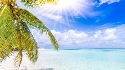 Perfect beach scenery with sun rays and palm leaves and beautiful sea view. Tropical beach...