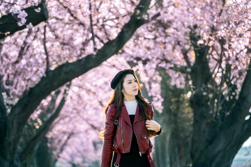 Wall Mural - Young woman walking in cherry blossom garden on a spring day. Row cherry blossom trees in Kyoto, Japan