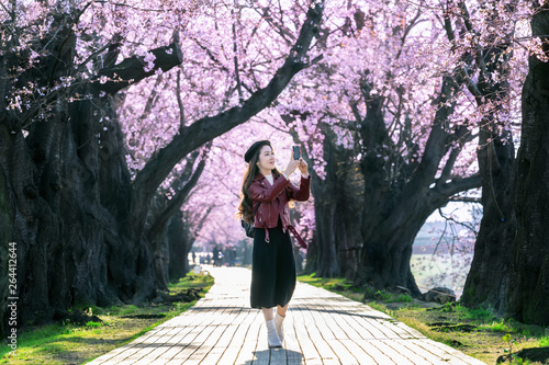 Wall mural Young woman walking in cherry blossom garden on a spring day. Row cherry blossom trees in Kyoto, Japan