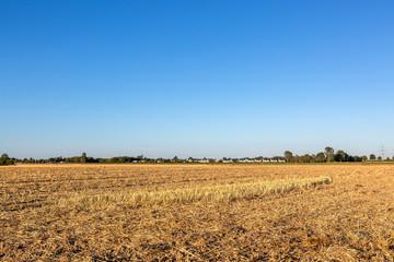 Weite Feldstrecken ausgetrockneter Erde und vertrockneter Getreidestoppel