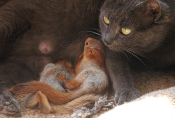 Pusha the cat feeds baby squirrels in Bakhchisaray
