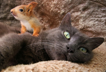 Pusha the cat and a baby squirrel look on in Bakhchisaray