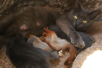 Pusha the cat feeds baby squirrels and a kitten in Bakhchisaray