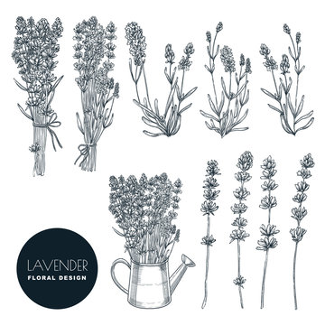 Lavender flower set, vector sketch illustration. Hand drawn bouquet, floral design elements isolated on white background