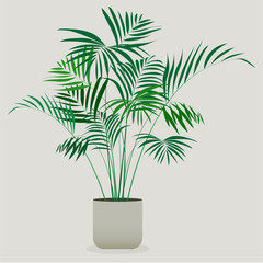 Illustration of green plant in a pot . Areca plant