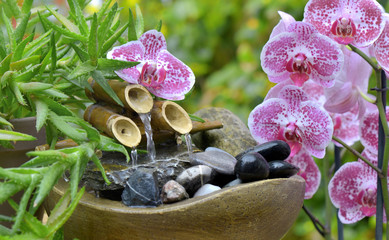 beautiful orchid and little fountain in a garden